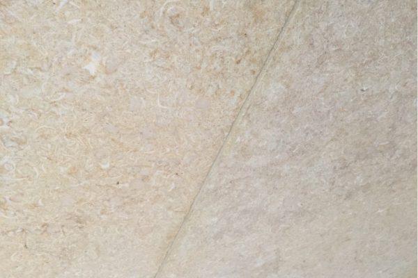 seashell-limestone-1000x750